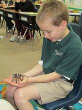 2nd Grade_Spider